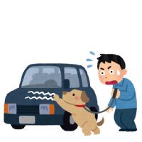 休日の散歩中に、犬が車にのぼり傷をつけてしまった